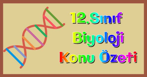 12.Sınıf Biyoloji Canlılar ve Çevre Konu özeti
