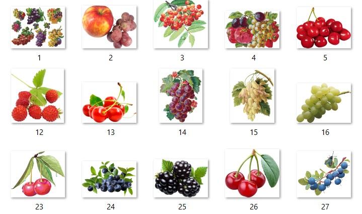 Karışık hd çözünürlükte png taneli meyve resimleri paketi 1