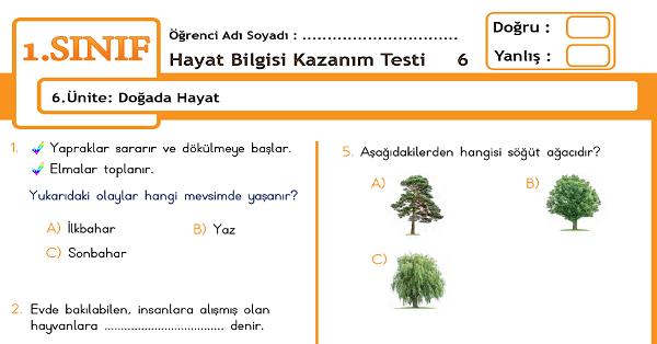 1.Sınıf Hayat Bilgisi Kazanım Testi - 6.Ünite - Doğada Hayat