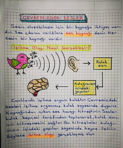 3.Sınıf Fen Bilimleri Çevremizdeki Sesler, Sesin İşitmedeki Rolü Konu Özeti